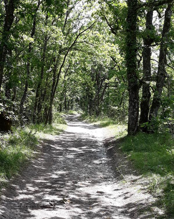 Ferrensac, une randonnée entre plaine du Dropt et coteaux