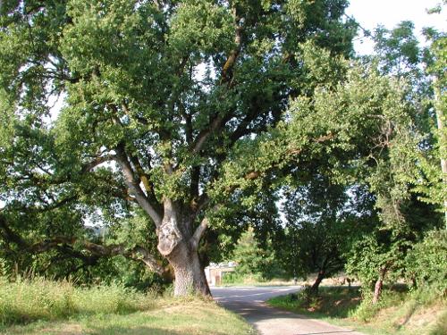 Pont-du-Casse / Darel, une boucle nature