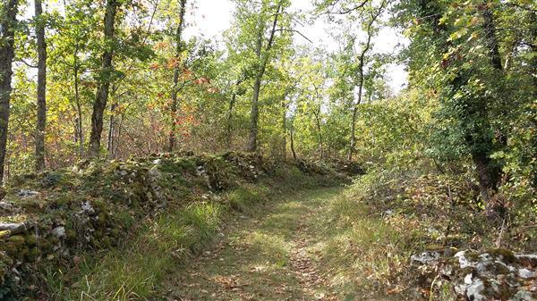 Thézac, escapade dans la forêt du Verdus